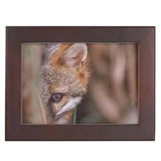 USA, Florida, Swamp Fox Keepsake Box