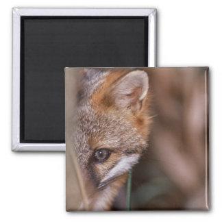 USA, Florida, Swamp Fox Magnet