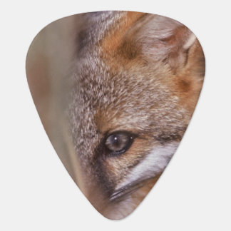 USA, Florida, Swamp Fox Plectrum
