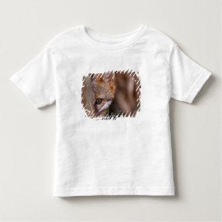 USA, Florida, Swamp Fox Toddler T-Shirt