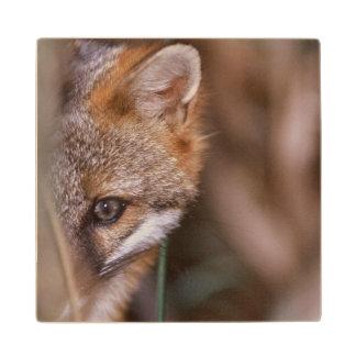 USA, Florida, Swamp Fox Wood Coaster