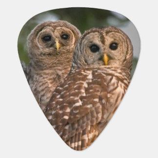 USA, Florida, Viera Wetlands. Three barred Guitar Pick