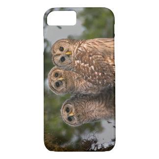 USA, Florida, Viera Wetlands. Three barred iPhone 8/7 Case