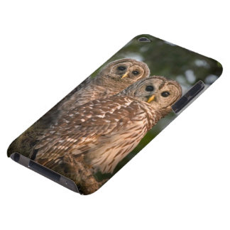 USA, Florida, Viera Wetlands. Three barred iPod Touch Cases