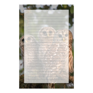 USA, Florida, Viera Wetlands. Three barred Stationery