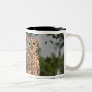 USA, Florida, Viera Wetlands. Three barred Two-Tone Coffee Mug