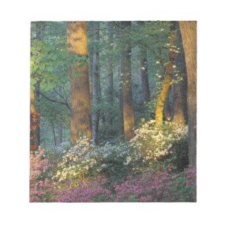 USA, Georgia, Callaway Gardens, Azalea forest. Notepad