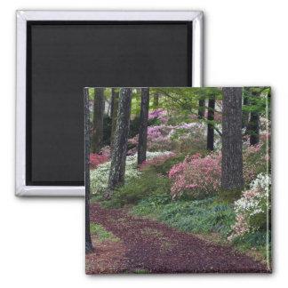 USA, Georgia, Callaway Gardens. Pathway Magnet