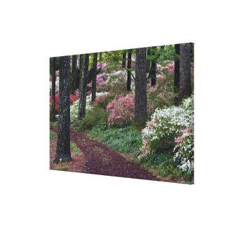 USA, Georgia, Callaway Gardens. Pathway Stretched Canvas Print