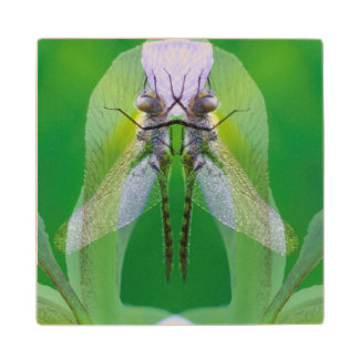USA, Georgia. Dragonfly montage Wood Coaster