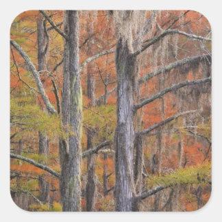USA, Georgia, George Smith State Park, Cypress Square Sticker