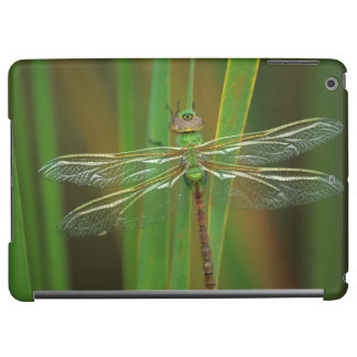 USA, Georgia. Green darner dragonfly on reeds