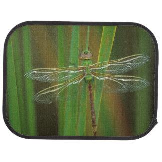 USA, Georgia. Green darner dragonfly on reeds Car Mat