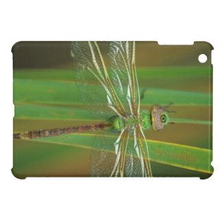 USA, Georgia. Green darner dragonfly on reeds iPad Mini Cover