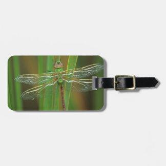 USA, Georgia. Green darner dragonfly on reeds Luggage Tag