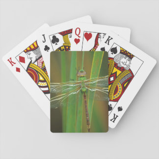 USA, Georgia. Green darner dragonfly on reeds Playing Cards