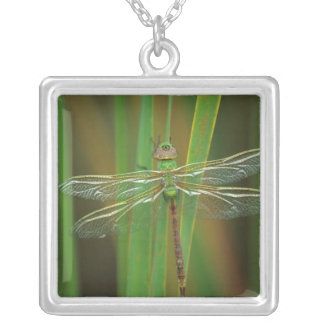 USA, Georgia. Green darner dragonfly on reeds Silver Plated Necklace