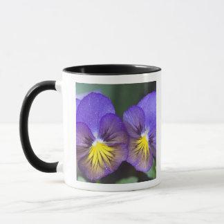 USA, Georgia, Pine Mountain. A closeup of pansy Mug