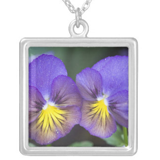 USA, Georgia, Pine Mountain. A closeup of pansy Silver Plated Necklace