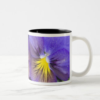 USA, Georgia, Pine Mountain. A closeup of pansy Two-Tone Coffee Mug