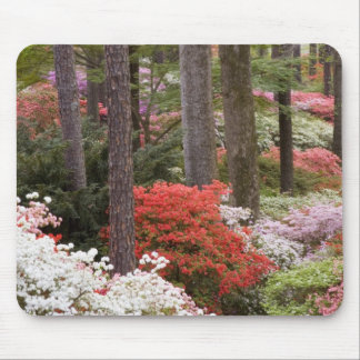 USA, Georgia, Pine Mountain. A forest of Mouse Mat