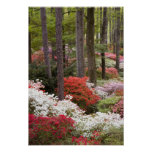 USA, Georgia, Pine Mountain. A forest of Poster