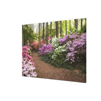 USA, Georgia, Pine Mountain. A pathway through Gallery Wrapped Canvas