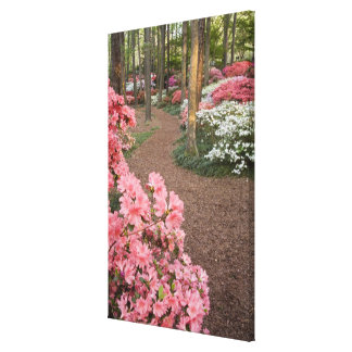 USA, Georgia, Pine Mountain. A pathway through Canvas Print