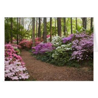 USA, Georgia, Pine Mountain. A pathway through Card