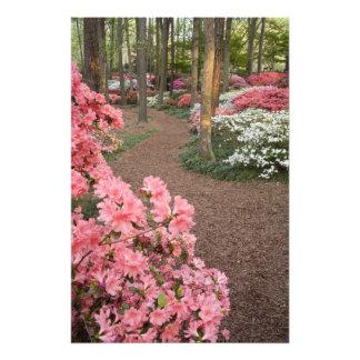 USA Georgia Pine Mountain A pathway through Photographic Print