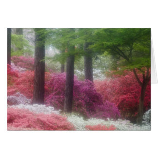 USA; Georgia; Pine mountain. Azaleas at Card