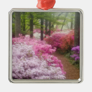 USA; Georgia; Pine Mountain. Azaleas at Christmas Ornament