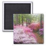 USA; Georgia; Pine Mountain. Azaleas at Square Magnet