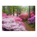 USA; Georgia; Pine Mountain. Azaleas at Postcards