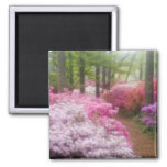 USA; Georgia; Pine Mountain. Azaleas at Square Magnet