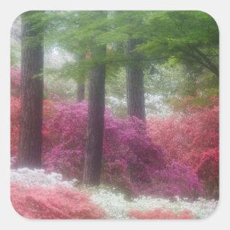 USA; Georgia; Pine mountain. Azaleas at Square Sticker
