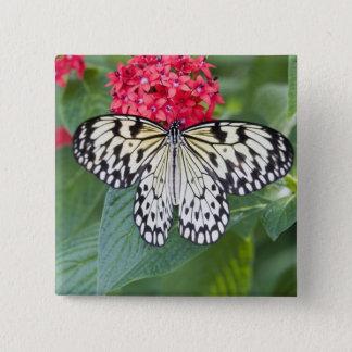 USA, Georgia, Pine Mountain. Paper Kite 15 Cm Square Badge