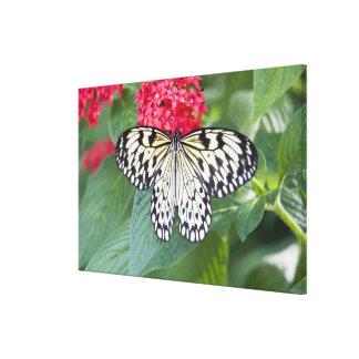 USA, Georgia, Pine Mountain. Paper Kite Canvas Print