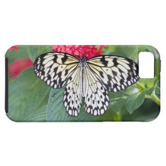 USA, Georgia, Pine Mountain. Paper Kite iPhone 5 Cover