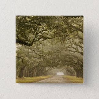 USA, Georgia, Savannah, An oak lined drive in 15 Cm Square Badge