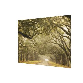 USA, Georgia, Savannah, An oak lined drive in Canvas Print