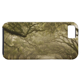 USA, Georgia, Savannah, An oak lined drive in iPhone 5 Covers