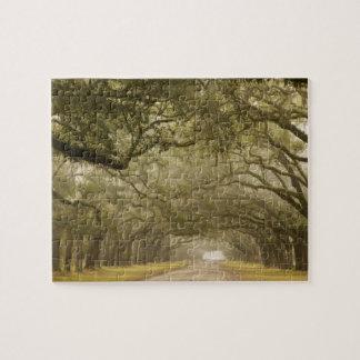USA, Georgia, Savannah, An oak lined drive in Jigsaw Puzzle