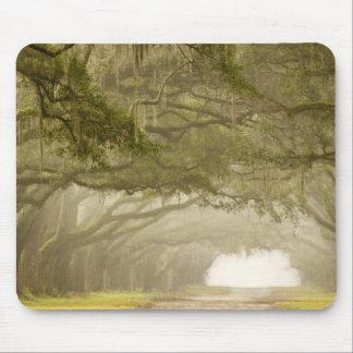 USA, Georgia, Savannah, An oak lined drive in Mouse Mat