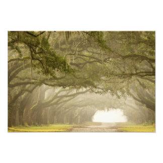 USA, Georgia, Savannah, An oak lined drive in Photo Print
