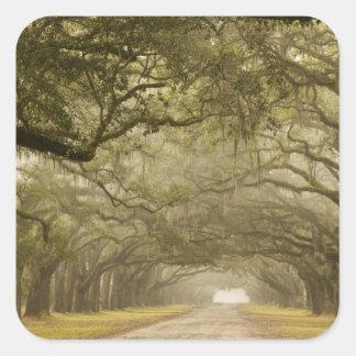 USA, Georgia, Savannah, An oak lined drive in Square Sticker