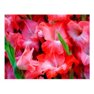 USA, Georgia, Savannah, Bouquet Of Gladiolus Postcard
