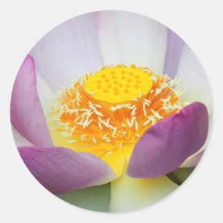 USA, Georgia, Savannah, Close-Up Of A Lotus 2 Round Sticker
