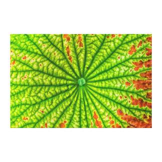 USA, Georgia, Savannah, Close Up Of Lotus Leaf Canvas Print