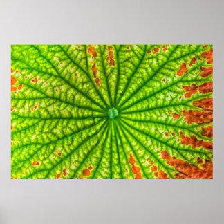 USA, Georgia, Savannah, Close Up Of Lotus Leaf Poster